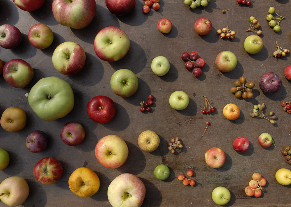 SoT Clinton 6-14-16 - Apples