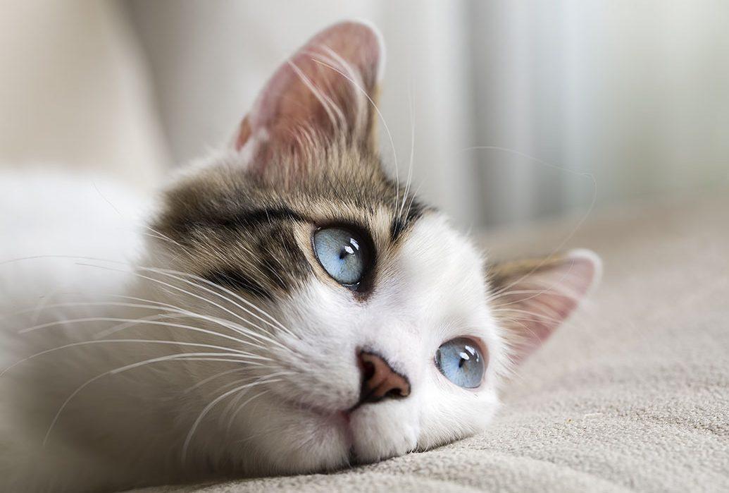 sot-kiggins-4-12-17-cats-1200x700